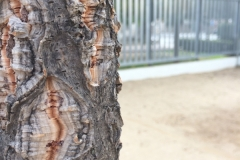Plantada d'arbres al pati